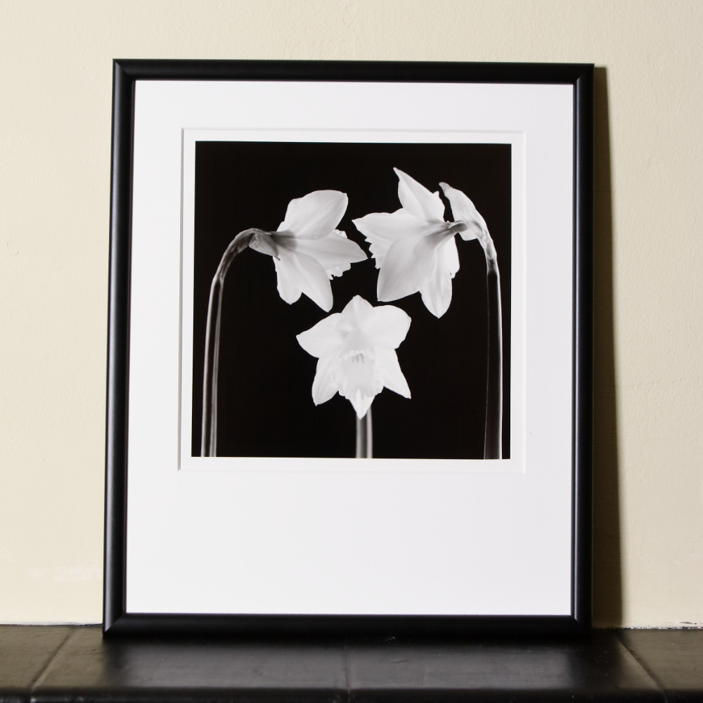 Artisan Black And White Print Of Three Daffodil Flowers Artistically Arranged, Matted And Framed, Standing On A Mantelpiece.