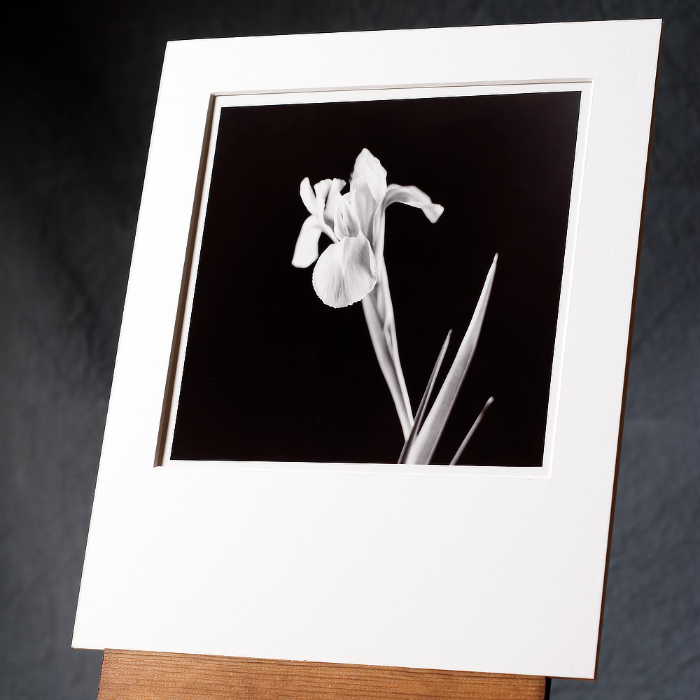 A Black And White Print Of A Single Iris Flower With Sharp Geometric Leaves, Hand Printed On A Classical Silver Gelatin Paper.
